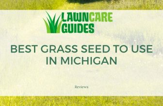 best grass seed to use in michigan