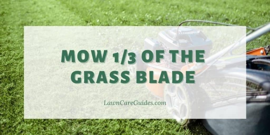 Mow 1/3 of the grass blade