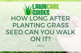How Long After Planting Grass Seed Can You Walk on It?