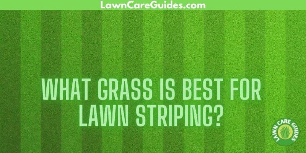 what grass is best for lawn striping?