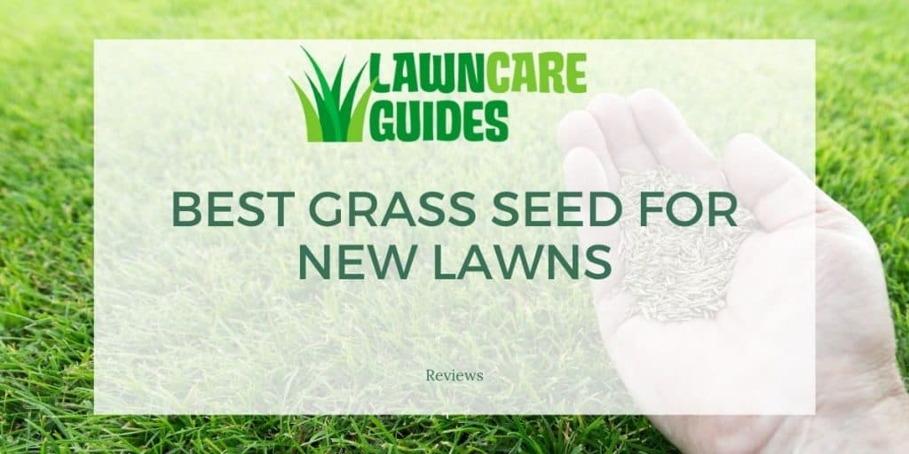 Best Grass Seed for New Lawns