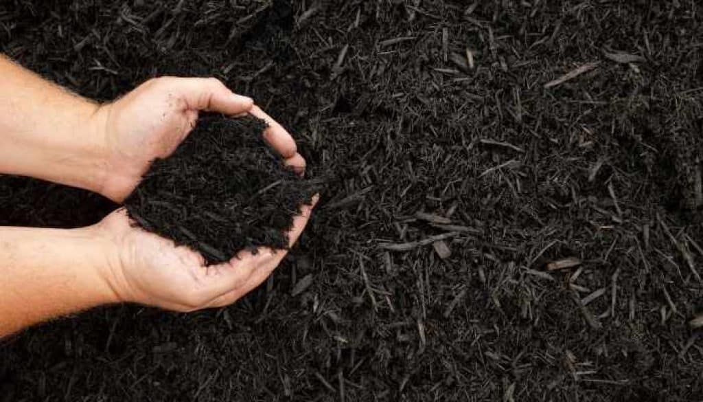black mulch for indoor plants