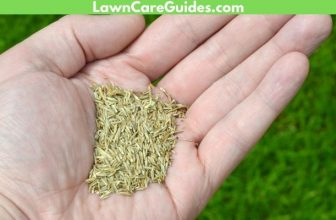 best grass seed to use for new lawns