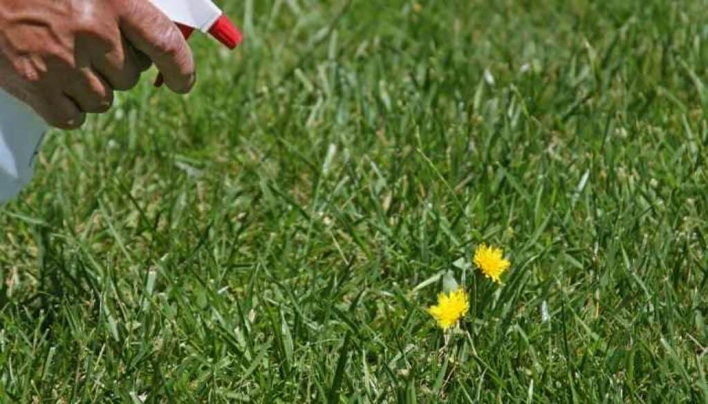 use chemicals to control weeds