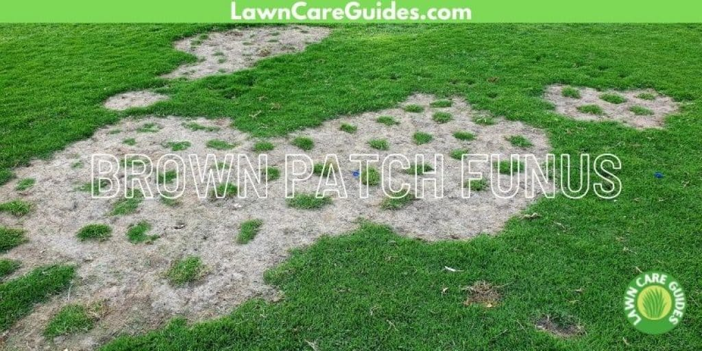 what does brown patch fungus look like?