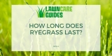 How Long Does Ryegrass Last?