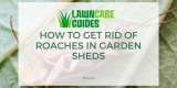 How To Get Rid Of Roaches in Garden Sheds! For Good…
