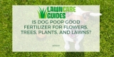 Is Dog Poop Good Fertilizer for Flowers, Trees, Plants, and Lawns?