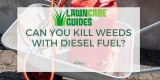 Killing Weeds With Diesel Fuel: How to Use?