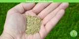Best Grass Seed for New Lawns – 2021