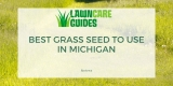 Best Grass Seed for Michigan – 2021 Reviews & Overseeding Guide